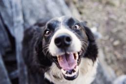 Sød hund der smiler